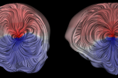 LIC texture visualization of the bioelectric current applied to a dipolar source in the head