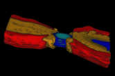 Node of Ranvier segmented mesh