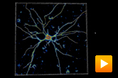 MSCEER - extracting neural networks in confocal microscopy data