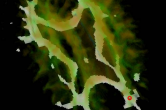Identifying functional communication pathways in the brain - seed points