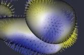 Shape analysis - amygdala