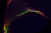 Segmentation of neural pathways with NeuroTracker