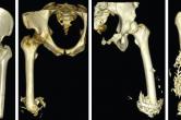 CT imaging of osseointegration