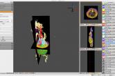 Porcine dataset in Seg3D